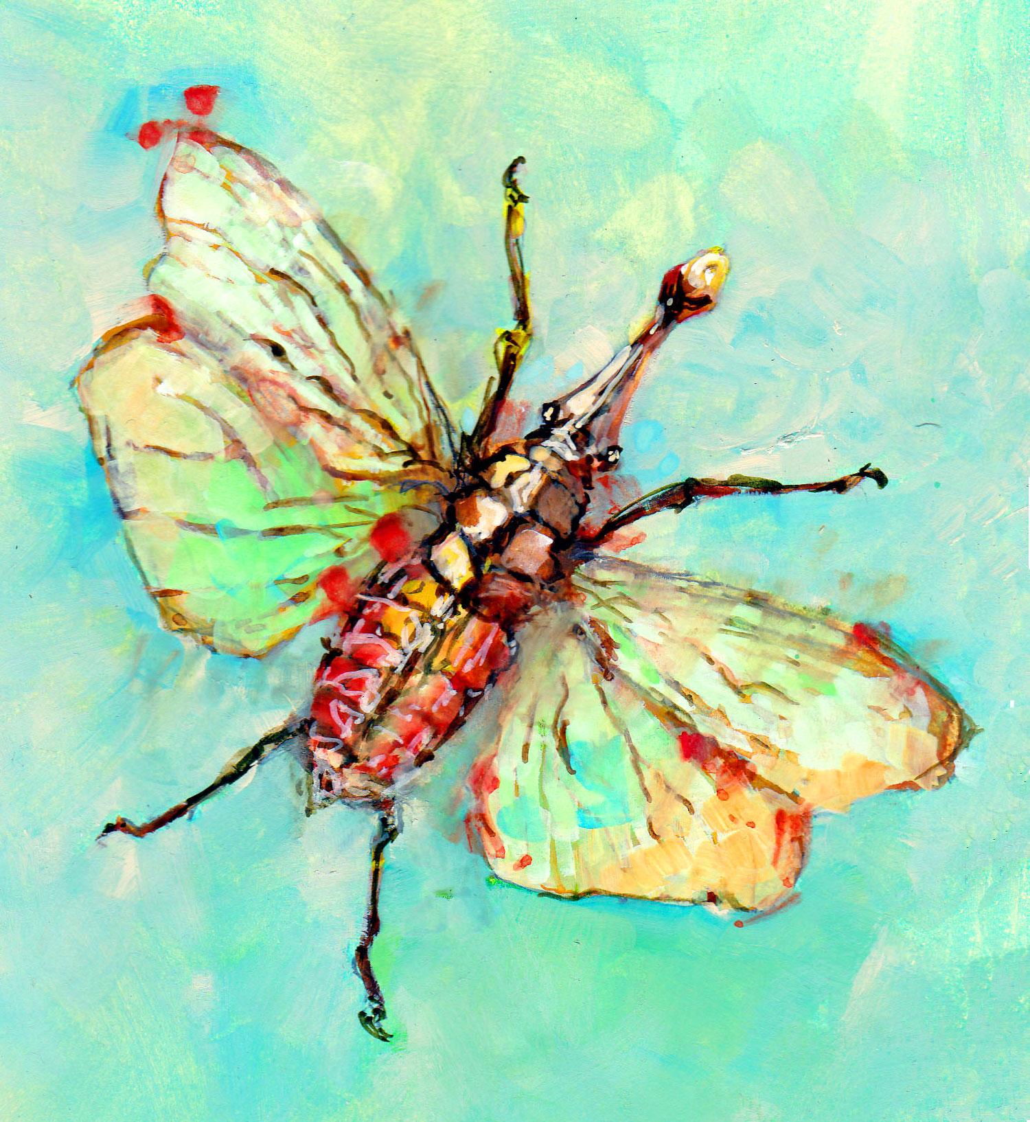 Lantern Fly