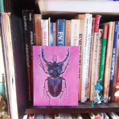 """Natural Selection"" Interior Decor: Pink Stag Beetle"