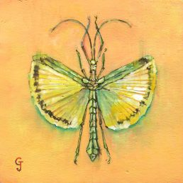 insect specimen watercolor painting original art interior design decor